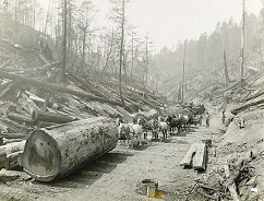 harvesting trees in the olden days